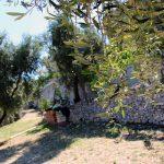 esterno-7-residenza-desimio-vieste-jpg
